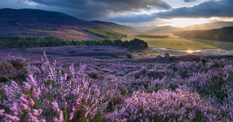 GGUK Scotland